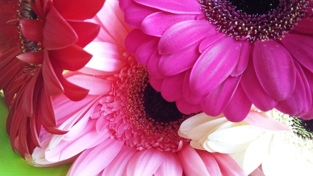 flowers close