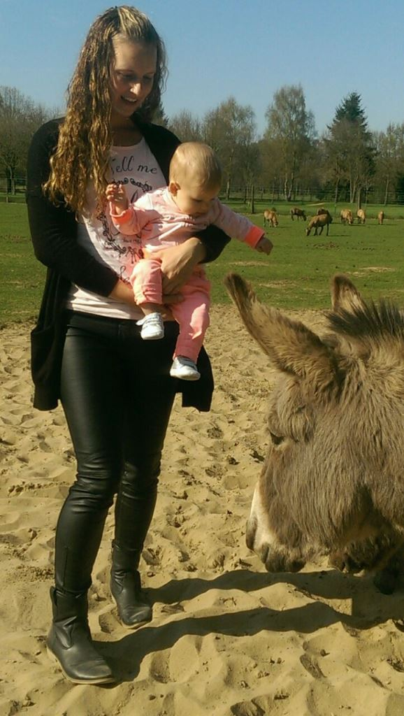 bij donkey