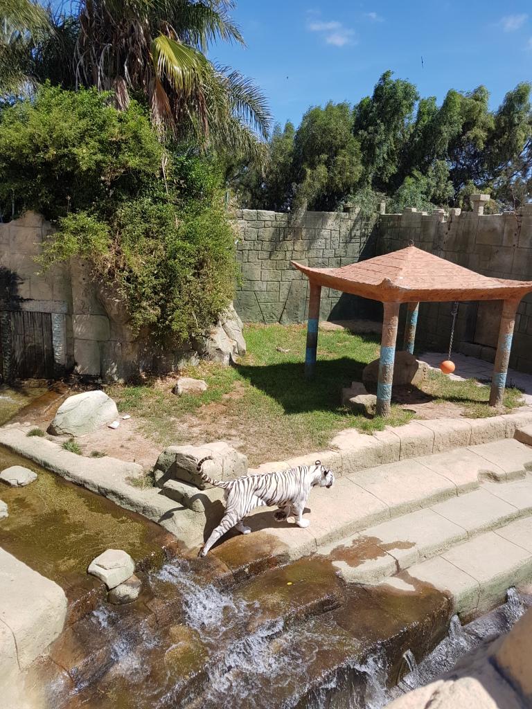 rancho texas park tijgers